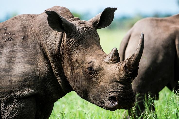 ФИАТА запускает курс, направленный на предотвращение торговли дикими животными и растениями