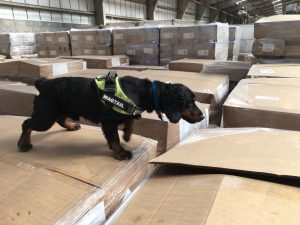 Wagtail UK launches explosive detection dog services for air cargo