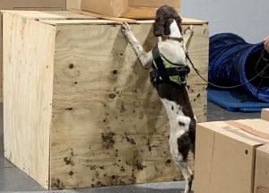Speedlink to offer cargo sniffer dog service at Belfast International