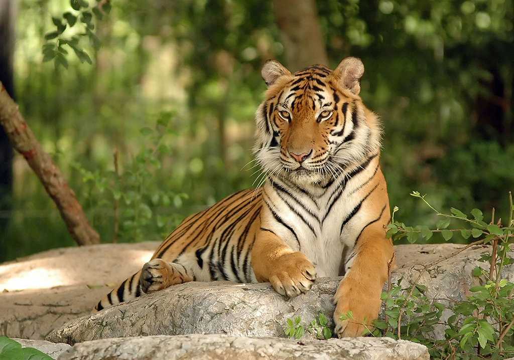 the white tiger pdf free download