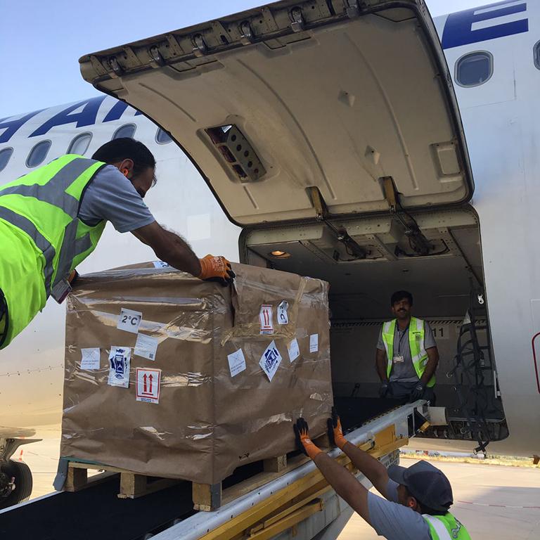 Berry important perishables customer for Turkish Cargo